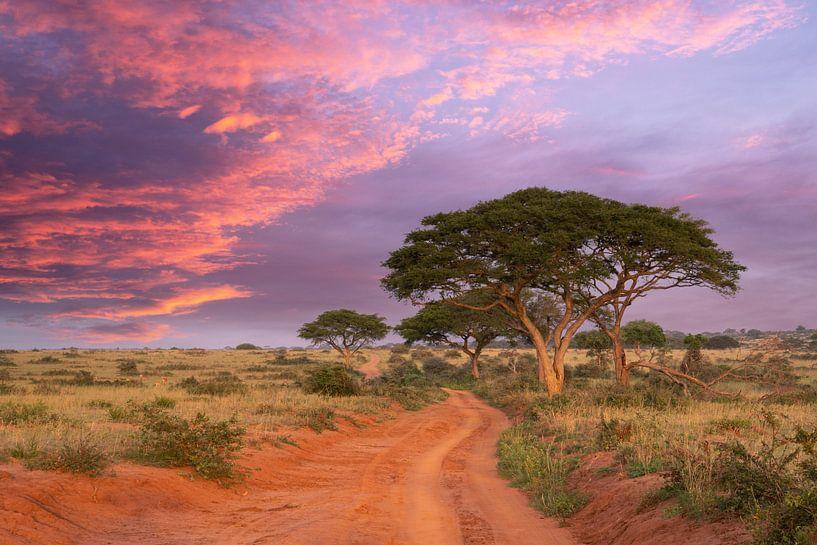 Coucher de soleil dans le parc national de Murchison Falls, Ouganda sur Alexander Ludwig