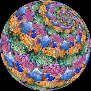 Fish Sphere Surface
