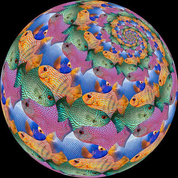 Fish Sphere Surface van Tis Veugen