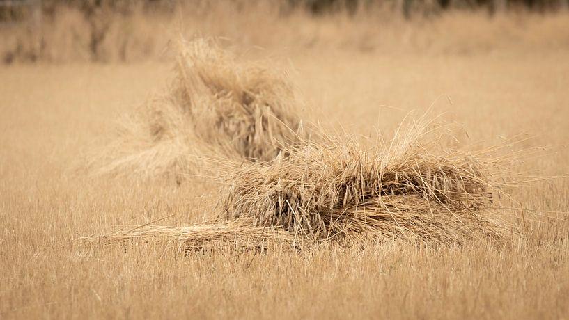 Graanschoven op een gemaaid veld van Michel Seelen