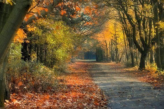 Herfstbos 2 van Anouschka Hendriks