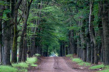 Waldweg von Anita Lammersma