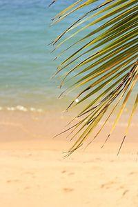 Tropisch strand van