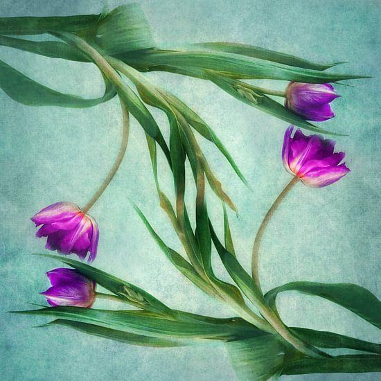 Tulpen van Claudia Moeckel
