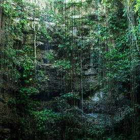 Cenote Mexico van Robert Beekelaar