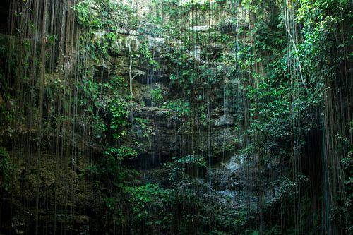 Cenote Mexico van