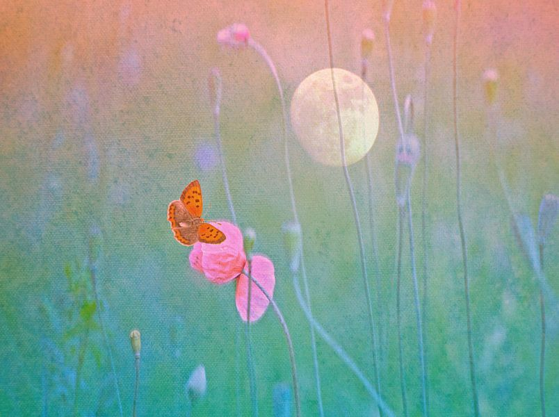 Butterfly by the Poppy and near the Moon von Die Farbenfluesterin