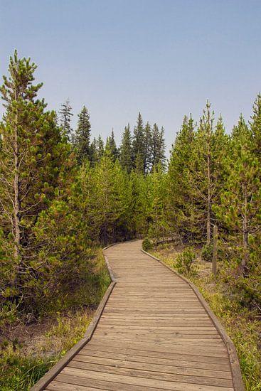 Pad naar Lake Yellowstone   van Jeanine Verbraak