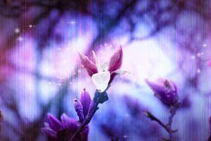 paarse lente van