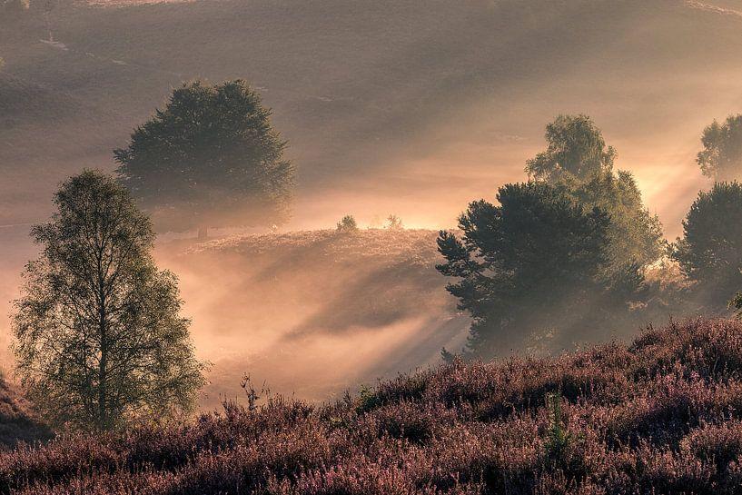 Posbank ( natuur ) van Henk Smit