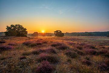 Westruper Heide van Frank Heldt