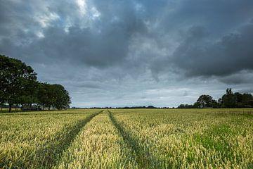 Graanveld bij Leermens (Gr.) van Ton Drijfhamer