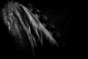 Detailbeeld van zwart paard van