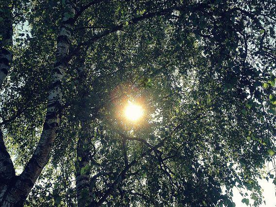 Zonlicht door de bomen