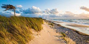 Darßer Westrand an der Ostsee