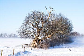 Kastanie in der Nähe einer steilen Kante, niederländische Winterlandschaft, Februar 2021 von Iris Brummelman
