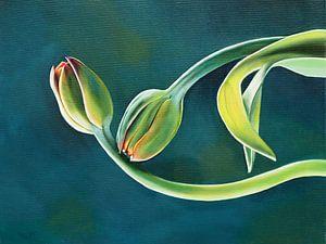 Tulpen von Helma 't Lam