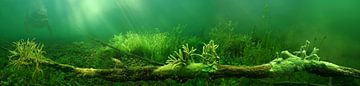 zoetwaterspons op boomstronk van nicole neuhof