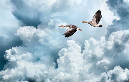 Vliegende ganzen tegen een verbazingwekkende wolkenlucht