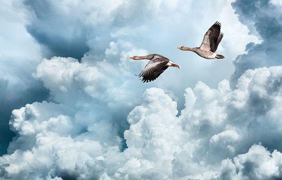 Vliegende ganzen tegen een verbazingwekkende wolkenlucht van Inge van den Brande