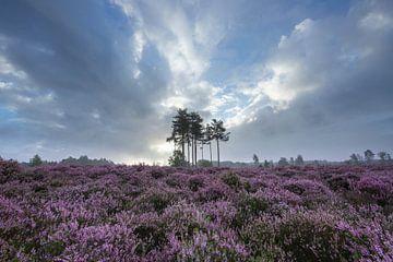 Heideveld Utrechtse heuvelrug Den treek Amersfoort van Peter Haastrecht, van