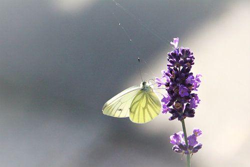 Een eenzame vlinder van Zus en Zo fotostudio
