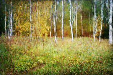 Malerisches Birkenwäldchen von Heike Hultsch