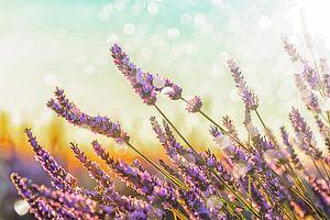 Sprankelende Lavendel van Manjik Pictures
