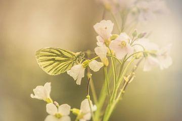 Vlinder in zachtlicht von Marjan Kooistra