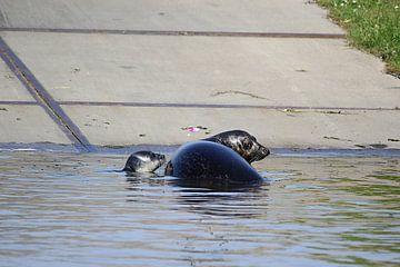 Zeehond met jong / pup 6 van Leon Verra