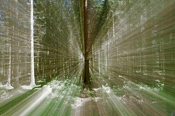 Dans la forêt aux nombreux rayons de soleil sur cuhle-fotos