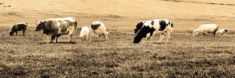 Koeien in Weiland Lisse Nederland Sepia van Hendrik-Jan Kornelis