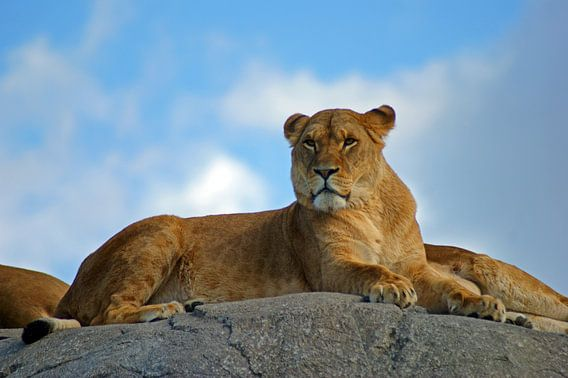 Leeuwin op een rots van Jeroen van Deel
