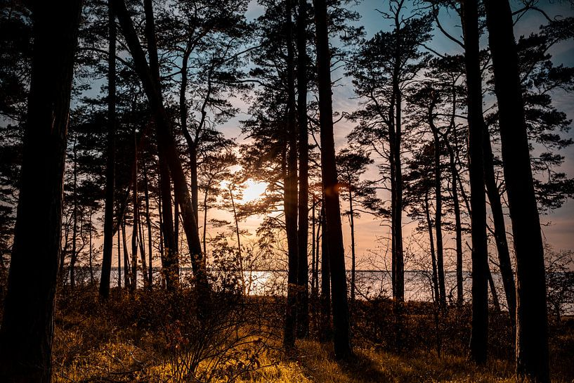 Küstenwald von Sebastian Witt