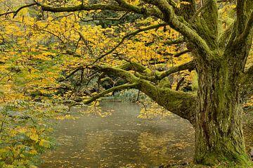 Herfst aan het water van Wil van der Velde
