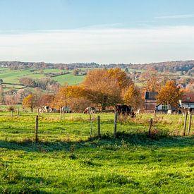 Couleurs d'automne sur les collines du sud du Limbourg sur John Kreukniet