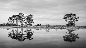 Dwingelderveld National Park in Schwarz und Weiß von Marga Vroom