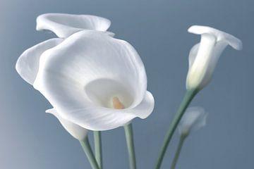 Trumpet flowers van Lynlabiephotography