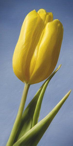 Gele tulp van Jan Wiersma