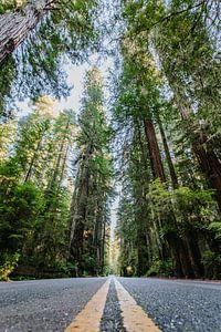 Redwoods sur Erwin van Oosterom