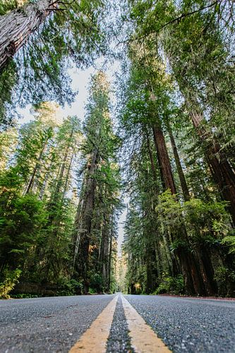 Redwoods van