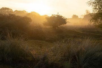 Landschap met tegenlicht in de ochtend van Joey Hohage