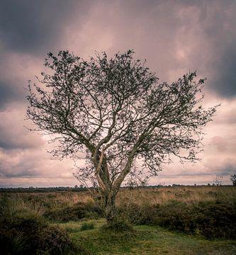 Eenzame boom van Erica Kuiper
