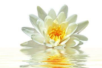 Bloeiende lotus bloem in water van Nisangha Masselink