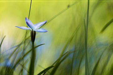 Blume von Ingmar de Vegte