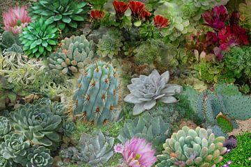Succulenten Collectie van christine b-b müller