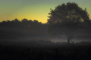 Eerste ochtendgloren van