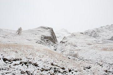 Baum in der schneebedeckten Berglandschaft von Remke Spijkers