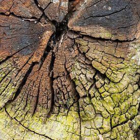 Verweerd hout van Ron Poot