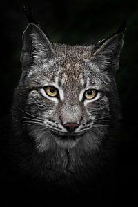 Close-up portret van een jonge lynx met gele ogen van Michael Semenov